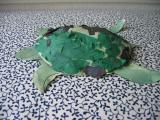 Turtle friend, January 2004