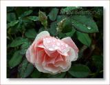 Clair matin in the rain