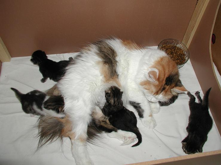 Mom Siiri is busy, the kittens are moving around!