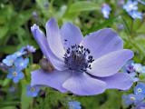 Easter flower from marie
