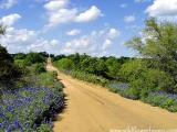 Bridge Over Bluebonnets