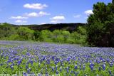 Texas Wildflower Report 2004