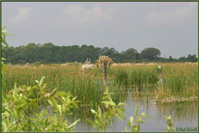 Pond Nesting area