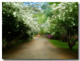 The Road to Glenburnie