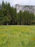 Half Dome above Meadow