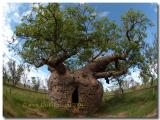 Boab Tree prison