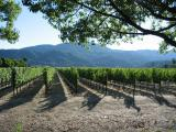 The wine flows..., Napa Valley, CA