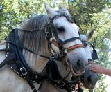 Horse Wagon Rides.jpg