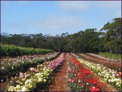 Portland Victoria (Australia)