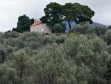 Church in the olive groves near Bar