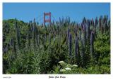 Wildflowers at the Golden Gate Bridge