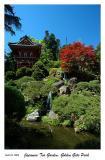 Japanese Tea Garden - Golden Gate Park