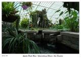 Conservatory of Flowers - Aquatic Plants Room - Golden Gate Park
