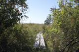 Howland Marsh in September