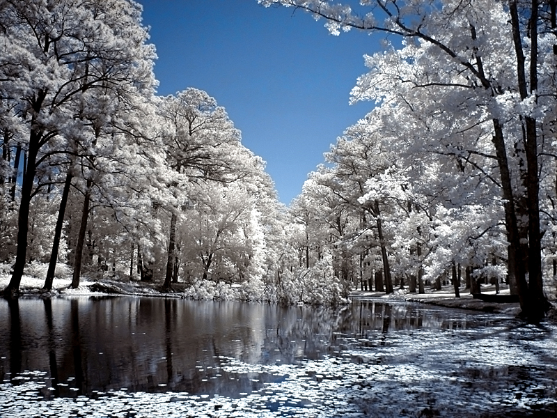 Brookgreen Gardens infrared 27