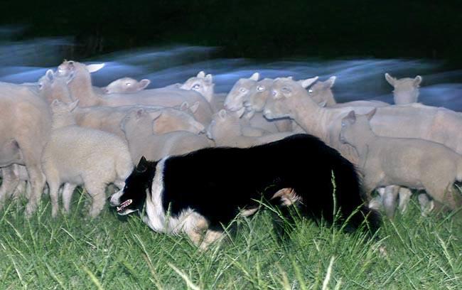 Ghost herding