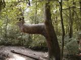 California Woods Nature Preserve(Cincinnati, Ohio)