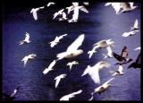 pigeon01.jpg
