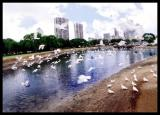 pigeon03.jpg