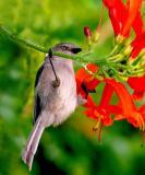 IMG_9735 birds.jpg