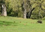 111   Wild piglets running after mama_7853`0403290948.JPG