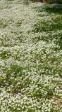 117   Vert pano Meadow Foam carpet_7951-6final`0403291517.jpg