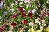 Mixed Colors Flowers Close.jpg