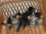 All kittens, but some are leaving the picture -   Koko porukka, mutta osa haluaa pois kuvasta