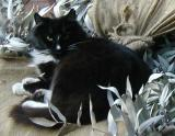 A burlap full of leaves is a good place to sleep...why did you wake me up!