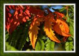 Autumn colours, Martock, Somerset