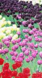 spring_2004