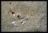 The Eye in the Sand...