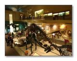 The Dinosaur RoomSmithsonian Natural History Museum,Washington, D.C.