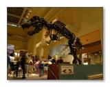 T-RexSmithsonian Natural History Museum,Washington, D.C.