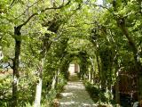 Beech Archway