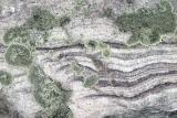 Lichen and Rock Patterns.jpg