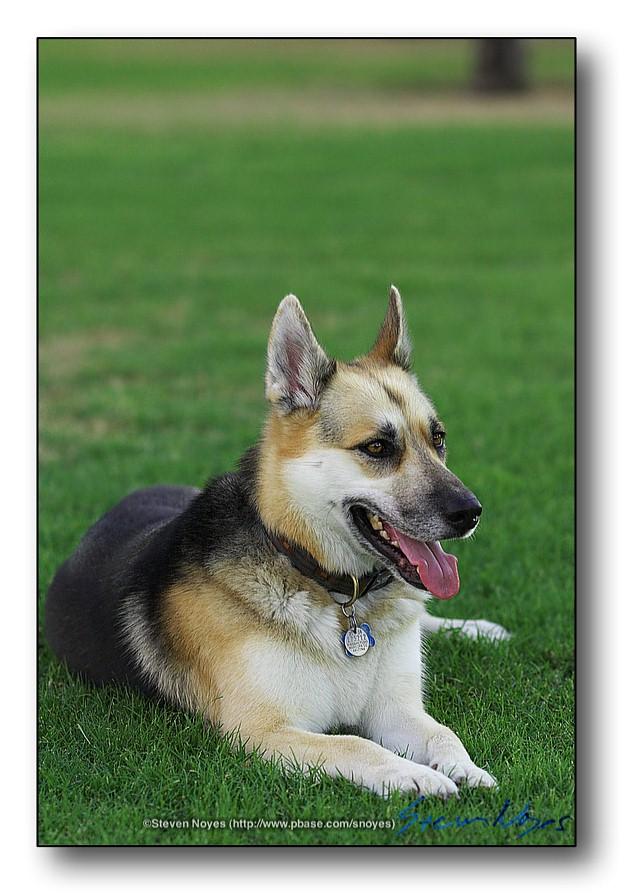 Trixie Dog  : Week 11