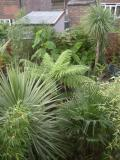 Tonys Manchester Garden (UK)