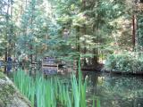 A small lake.JPG