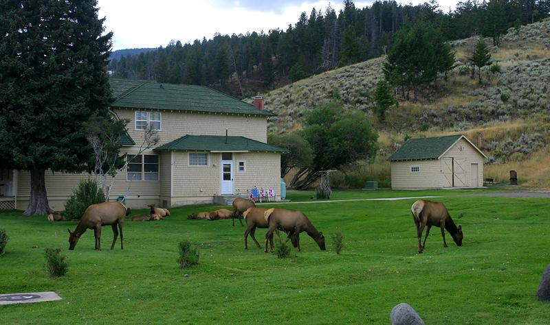 Elk 120