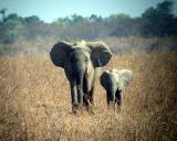 Aug '03 - Africa (1st trip)