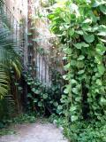 Hotel greenery, Merida
