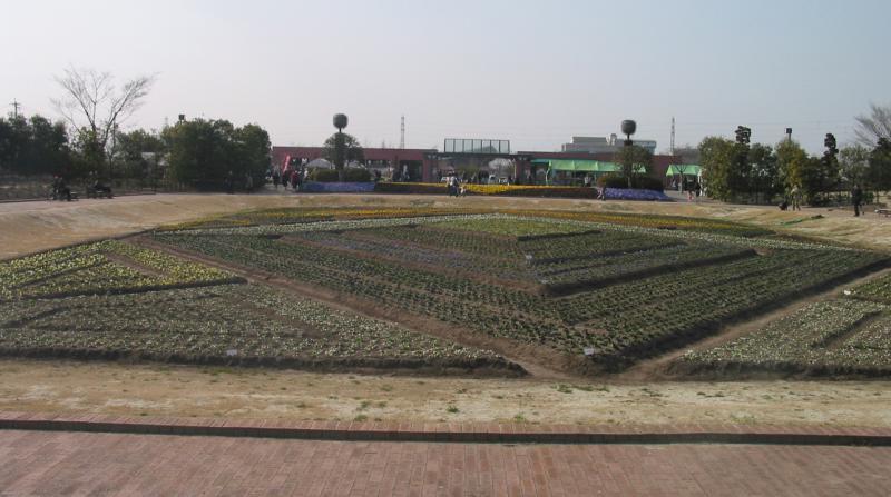 Geometric planting