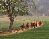 horse monk1203.jpg
