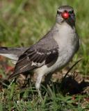 Canon 1D Mark II Gallery - Feeding Birds
