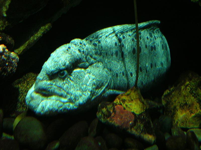 Wolf eel (aint he cute?)