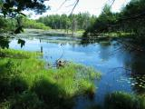 Beaver Pond 5172