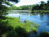 Beaver Pond 5173