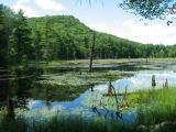 Beaver Pond 5202