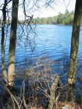 BeaverChewedTrees_4149.jpg
